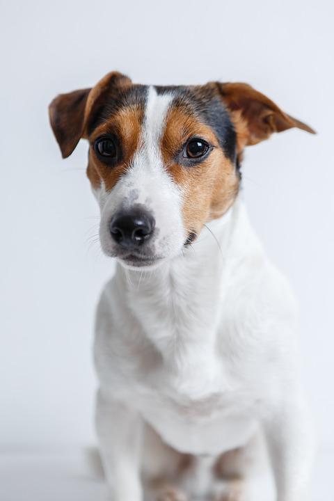 Vendée Dog - pension canine et féline à Poiroux en Vendée